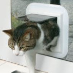 cat-flap-upvc